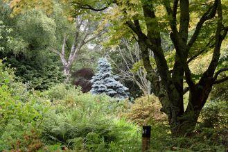 Mount Usher arbres
