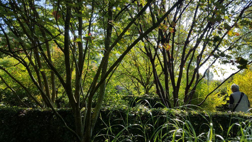 moulin ventin 2 arbres